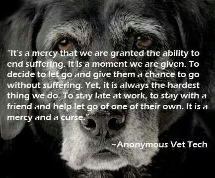 Dealing with euthanasia: a vet tech perspective